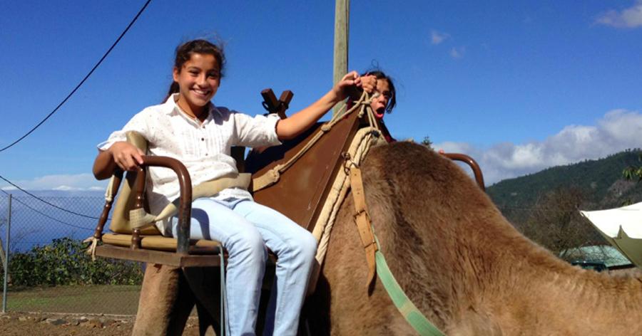 naira-noticias-montando-camellos-2014